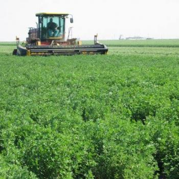 tractor harvesting a green field