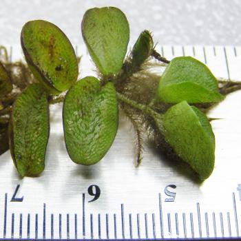 plant sitting on a ruler