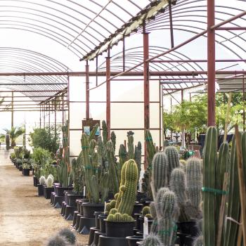 Greenhouse with different cacti