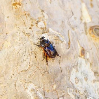 bark beetle sitting on tree