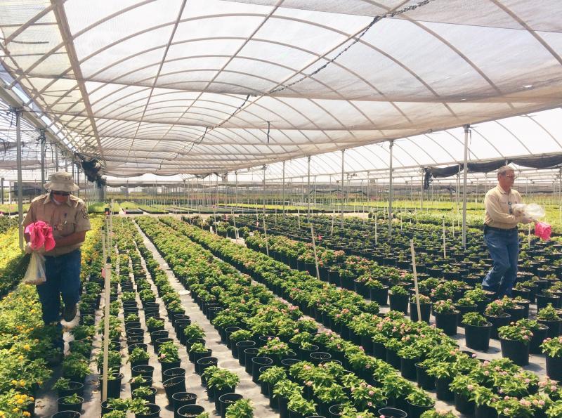 nursery, arizona, inspection, inspectors, certification, certified nursery, agriculture