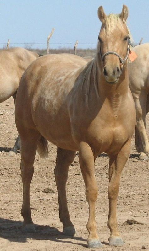 Horse, agriculture, arizona