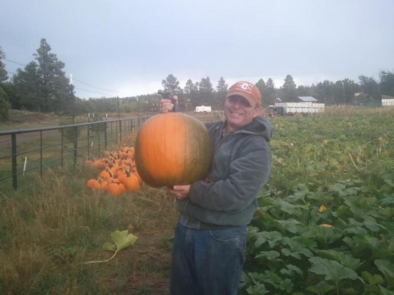Arizona Agriculture, Mark Killian, pumpkin