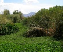 landscape covered with green grasses and bushes with mountains in the background