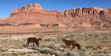 Horses in Fredonia