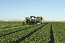 Leafy greens being harvested